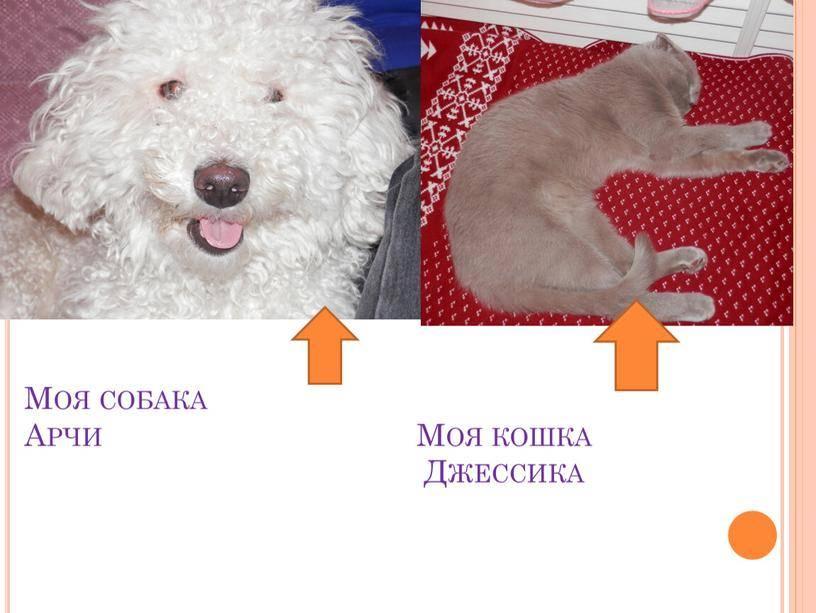 Клички собак (популярные имена кобелей и сук)