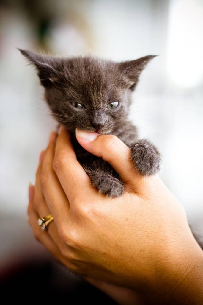 Котенок кусается и царапается: почему и что делать?