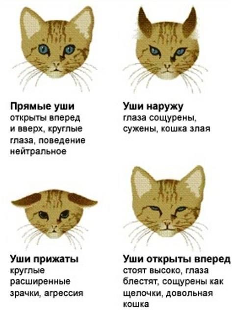 Как отличить кота от кошки? советы и рекомендации