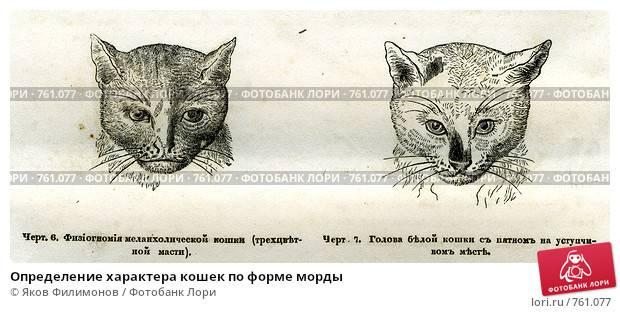 Отличие кота от кошки, как определить пол котёнка и как их отличать