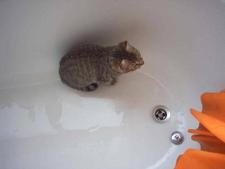 Почему кошки и коты так боятся и не любят воды