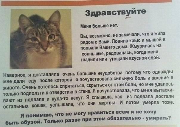 На какой срок можно оставлять кошку одну   мой обожаемый кот   яндекс дзен