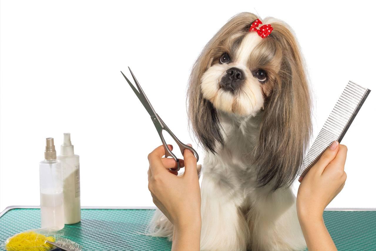 Все о профессии парикмахера собак: название специалистов по стрижке питомцев