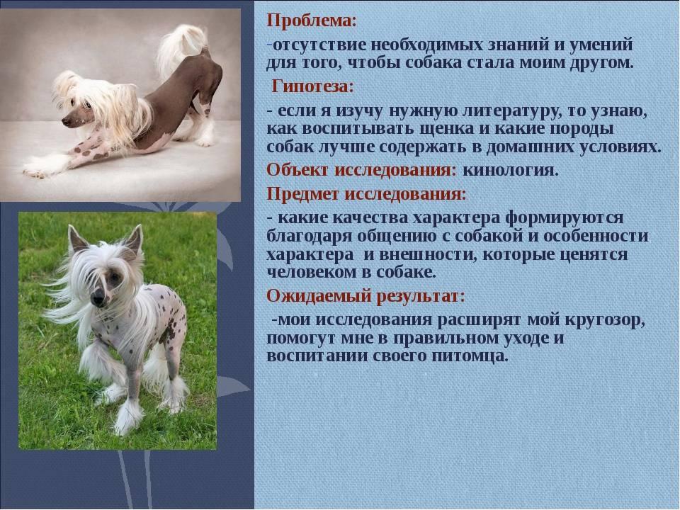 Подробное описание и характеристика породы собак керн терьер