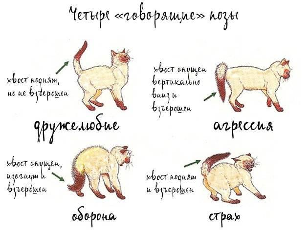 Понимают ли домашние животные язык людей: результаты исследований