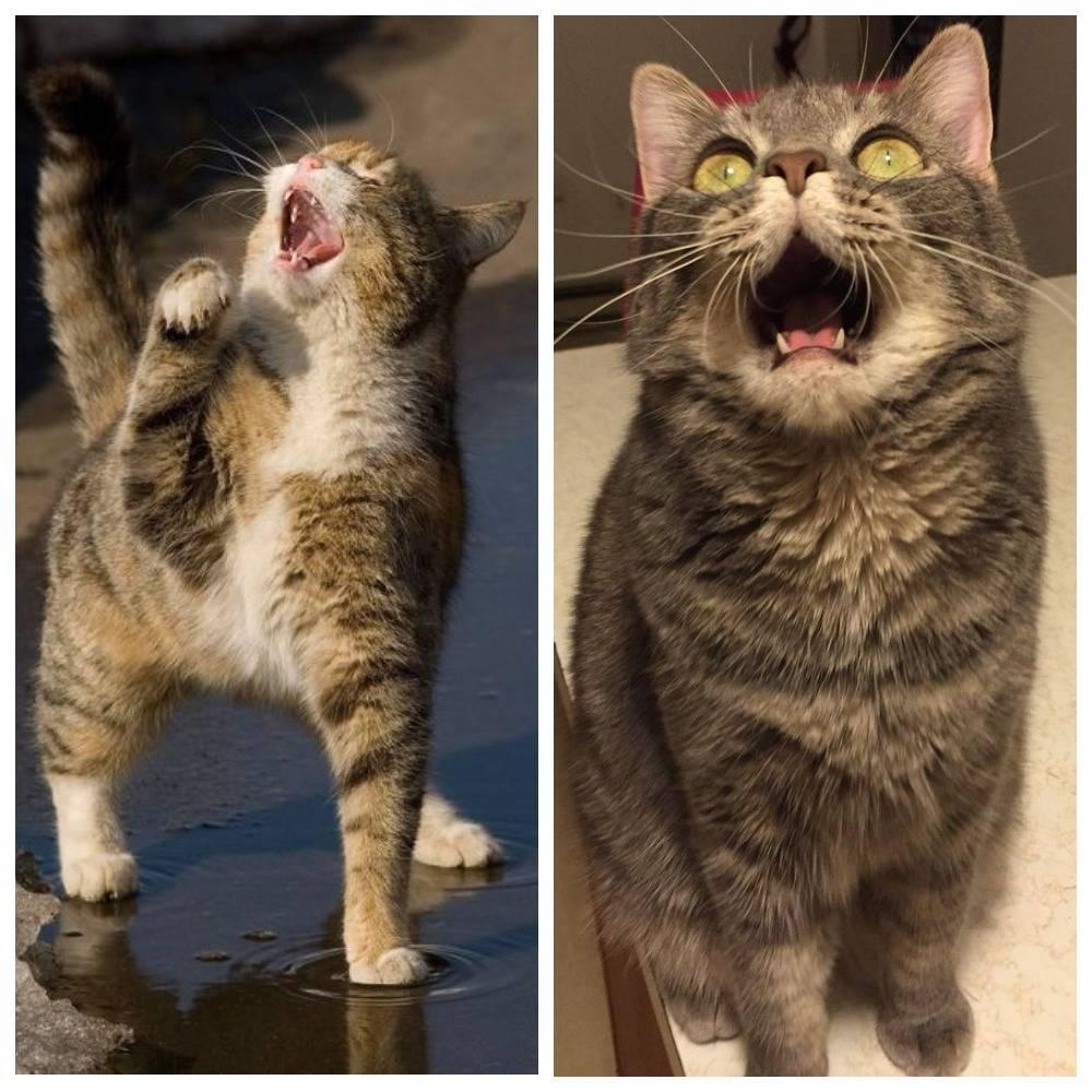 Как отучить кота орать: есть ли причины для крика? как отучить кота орать: есть ли причины для крика?