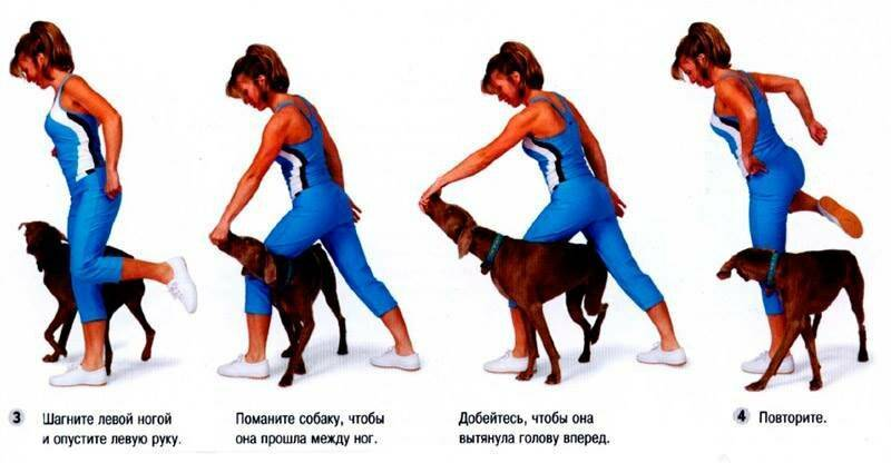 Как научить собаку разным командам в домашних условиях?