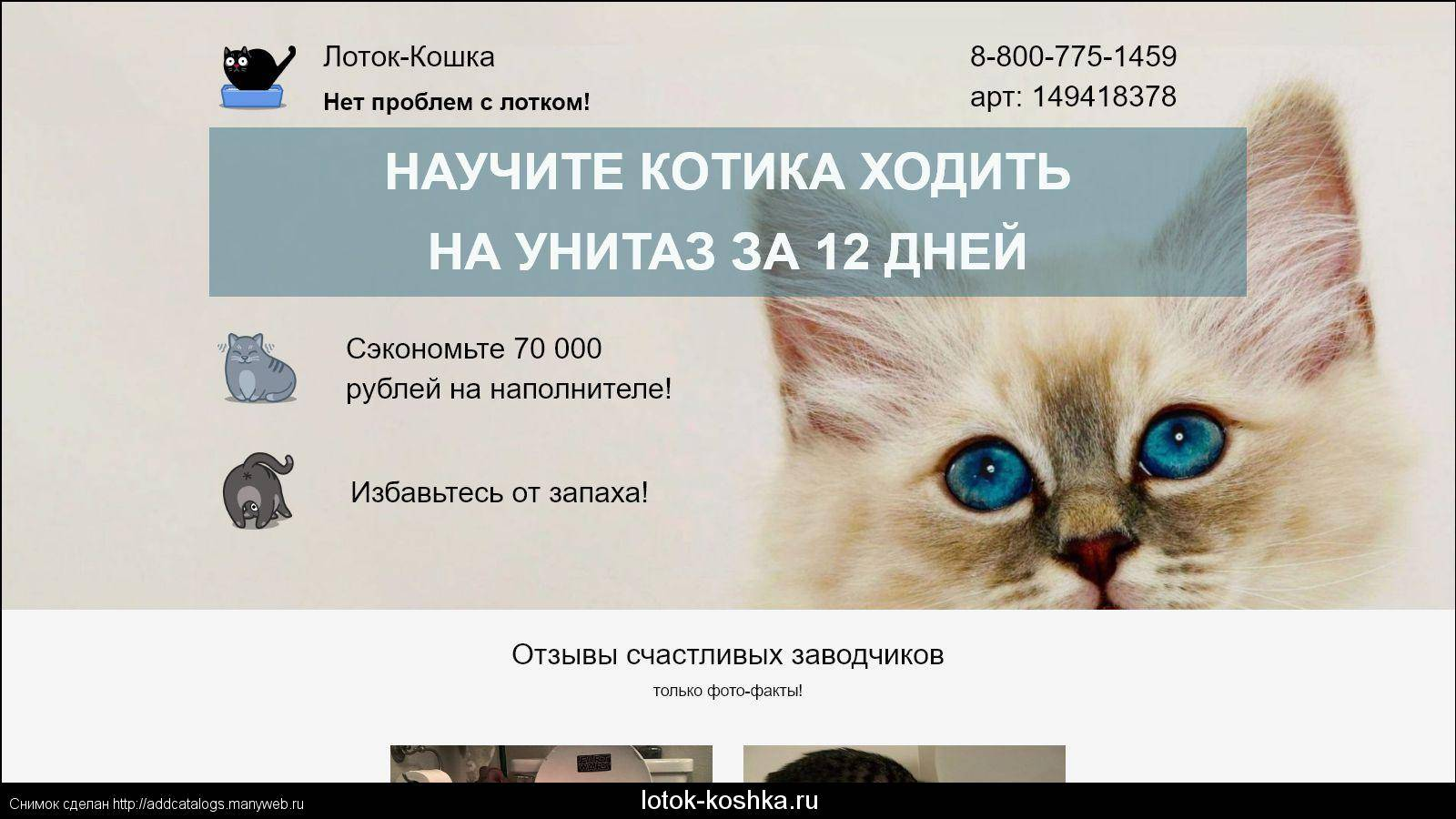 Лоток ваш не хорош — кошка и кот перестали справлять нужду на место