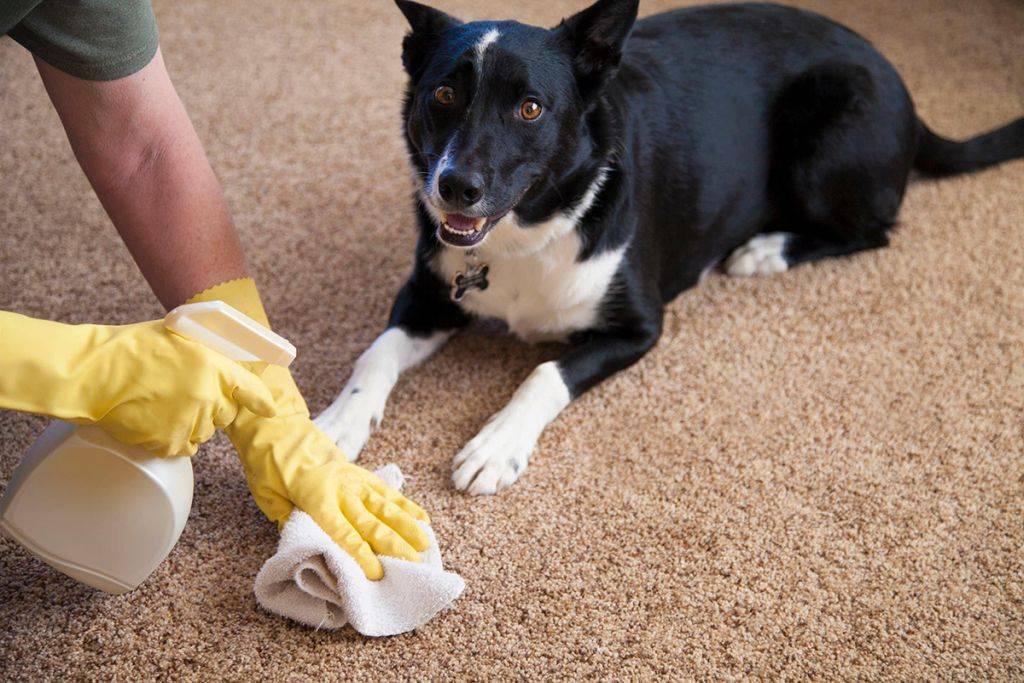 По каким причинам маленькие щенки могут часто мочиться и понемногу