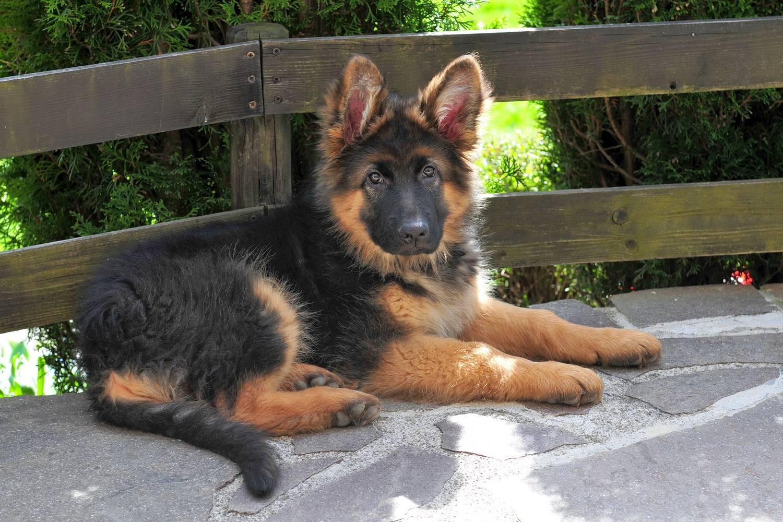 Клички для черных собак, красивые имена для щенка мальчика и девочки.