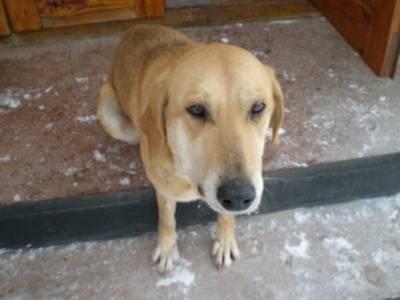 Отек морды у собак: этиология, симптомы, лечение. симптомы отека квинке