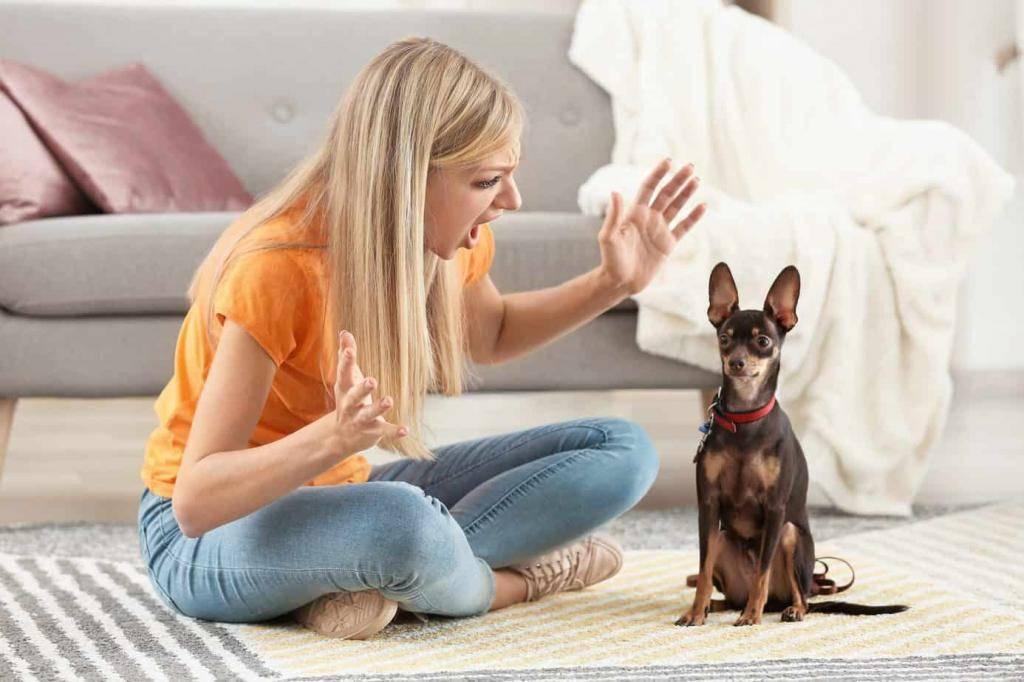 Как ругать и наказывать собаку правильно