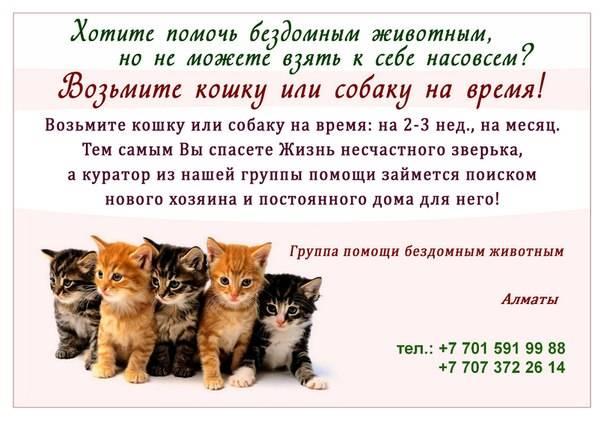 Приручение дикого котёнка к рукам: полезные советы и рекомендации