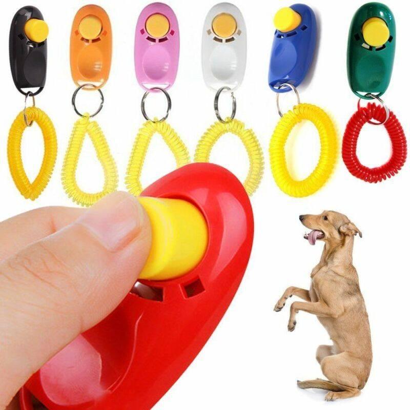 Дрессируем собаку при помощи кликера и электронного ошейника |