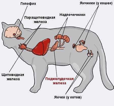 Что делать, если кот не может пописать