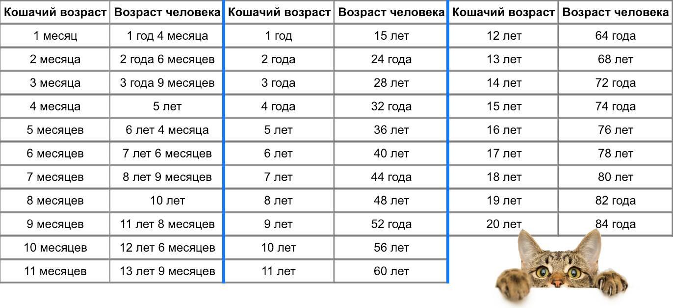 Возраст кошки по человеческим меркам: таблица расчёта лет