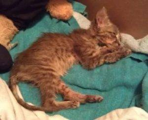 Понос у кота чем лечить препараты - муркин дом