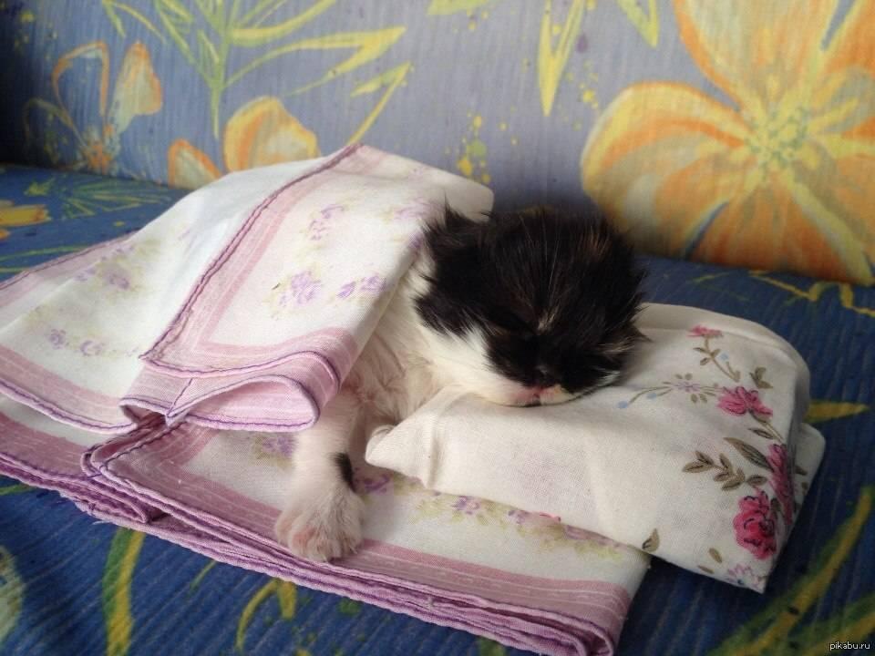 Почему кошка писает на кровать: причины и что делать почему кошка писает на кровать: причины и что делать
