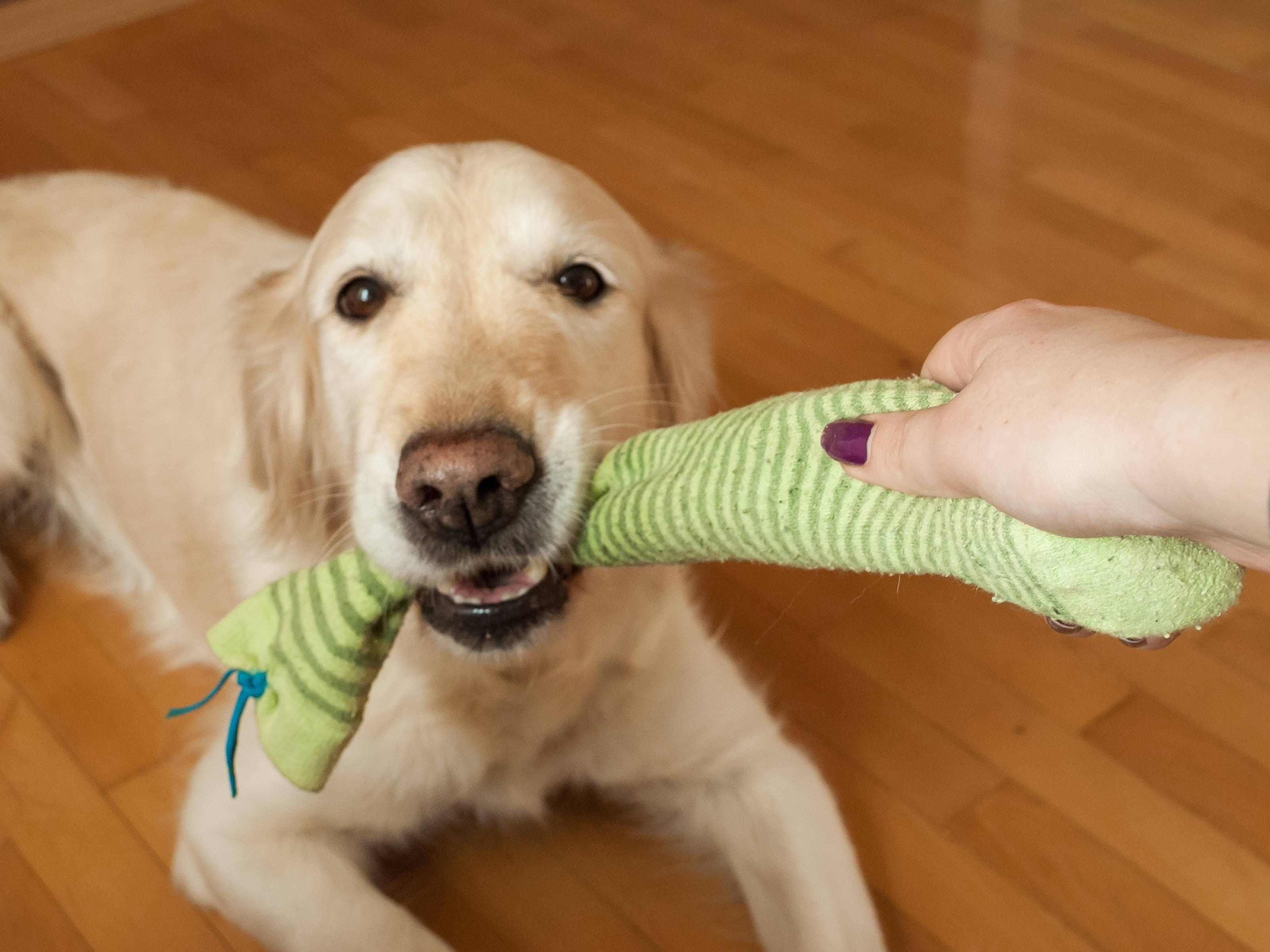 Отучаем щенка кусаться