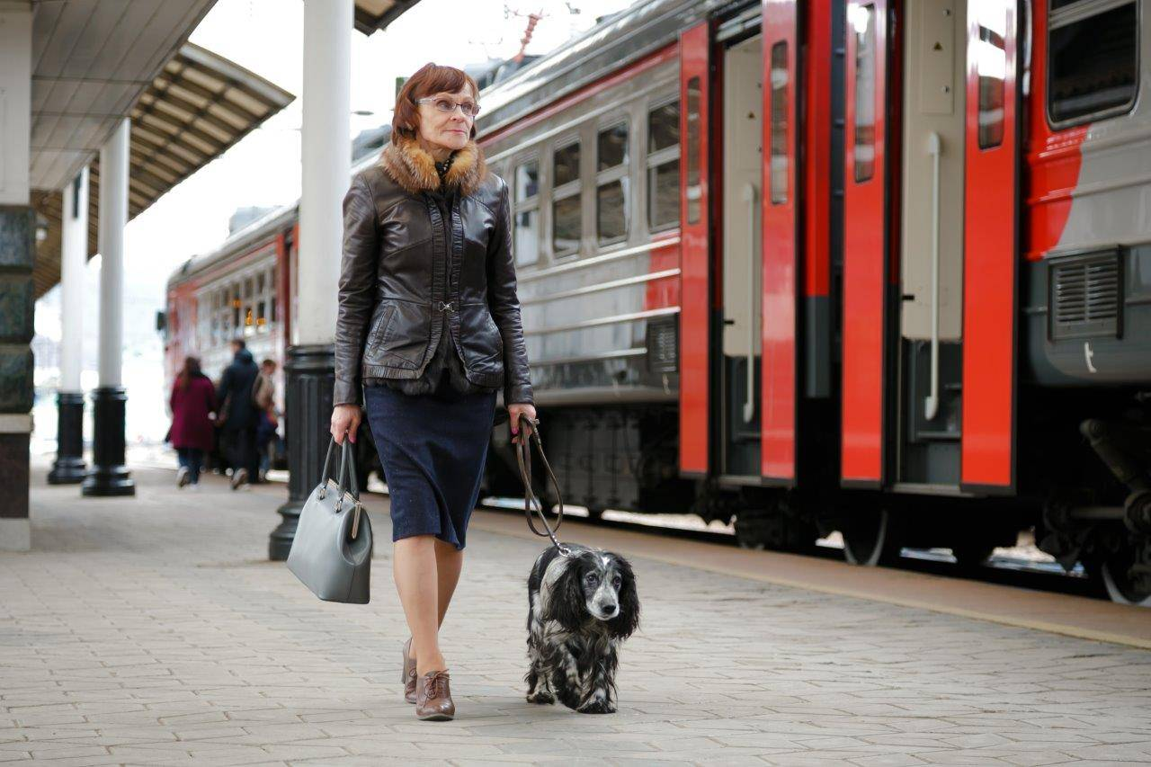 Как провозить животных в поезде по всем правилам - лайфхакер