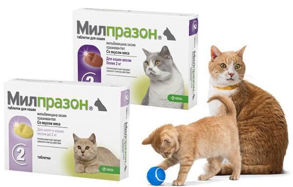 Милпразон для кошек: инструкция по применению, отзывы