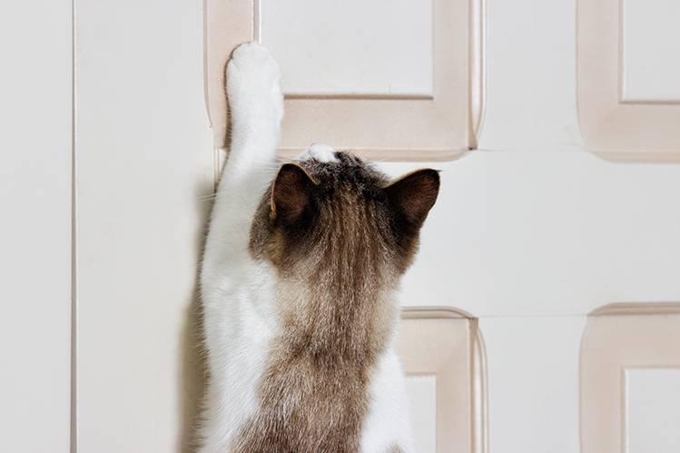 Почему кот ходит по дому и мяукает без причины: не находит себе места и не спит по ночам