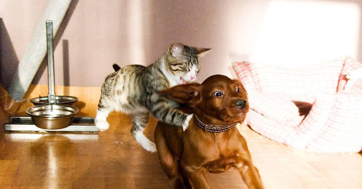 6 способов как подружить кошку с собакой в квартире