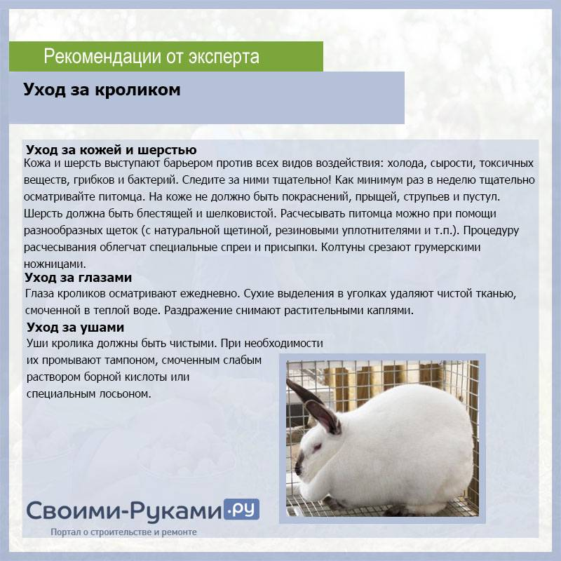 Какие травы можно давать кроликам, а какие нельзя?