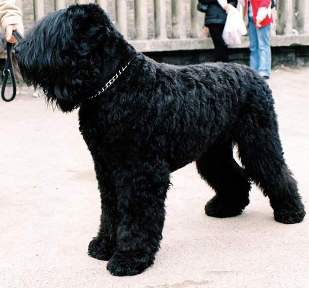 Обзор лучших русских пород собак, которые были выведены на территории россии