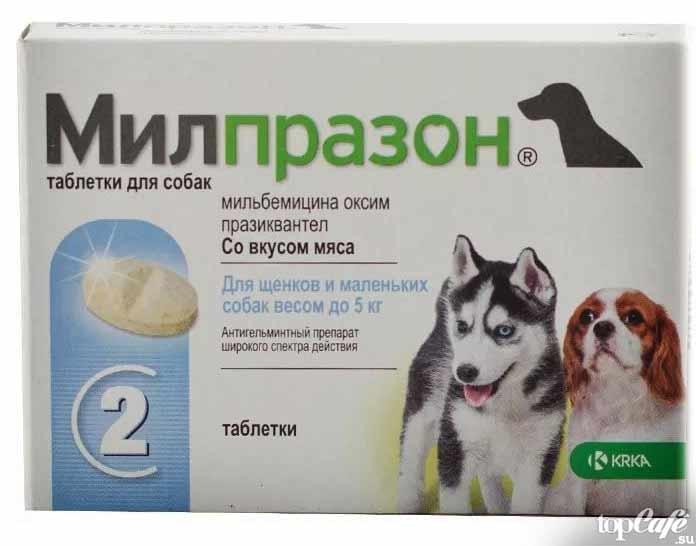 Эффективные средства от глистов для кошек: таблетки и капли