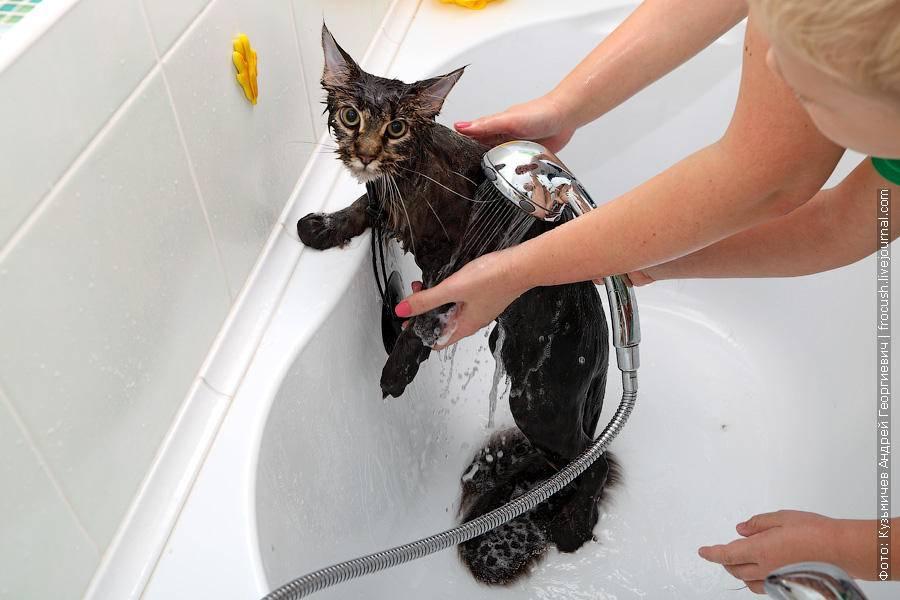Почему кошки боятся воды: реальные доводы