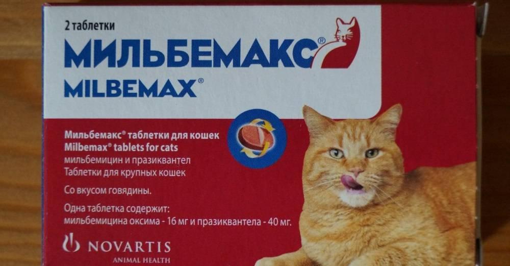 За сколько дней до прививки глистогонить кошку?