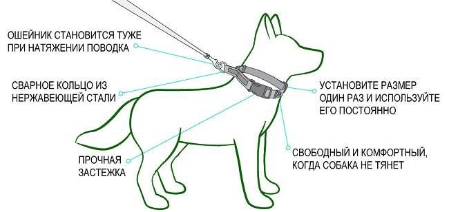 Как выбрать ошейник для щенка
