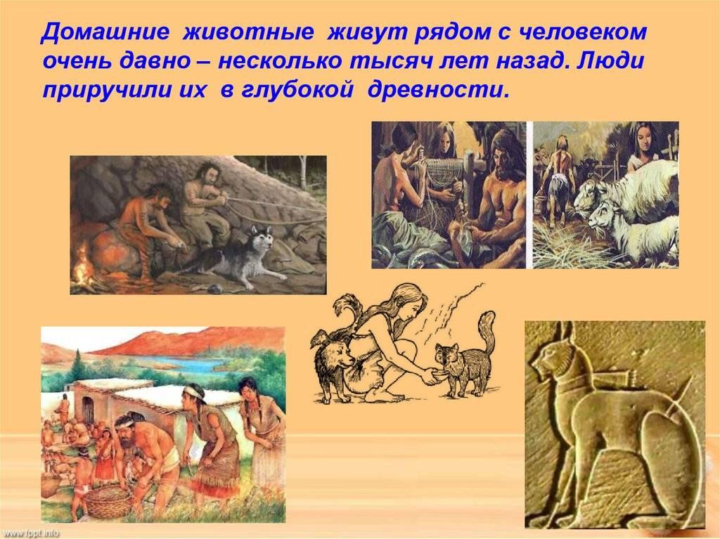 Краткая история происхождения собаки