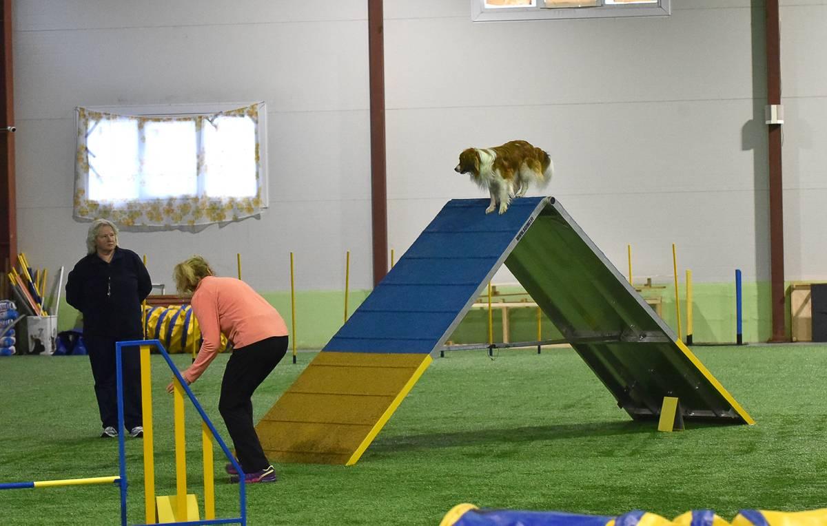 Аджилити — соревнования дрессированных собак