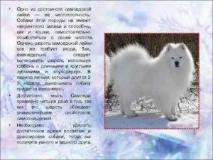 Пушистые породы собак: названия пород, их описания с фотографиями