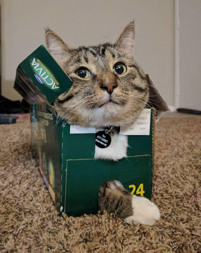 Почему кошки любят коробки и пакеты: объяснение поведения