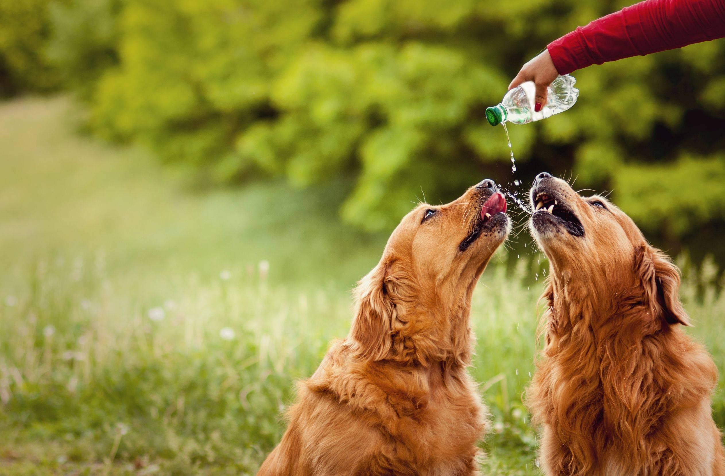 Почему собака мало пьет воды. собака мало пьет или не пьет вообще