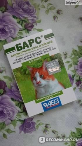 Как вывести блох у котенка от 2-х дней и старше в домашних условиях - эффективные спреи, капли, шампуни, ошейники