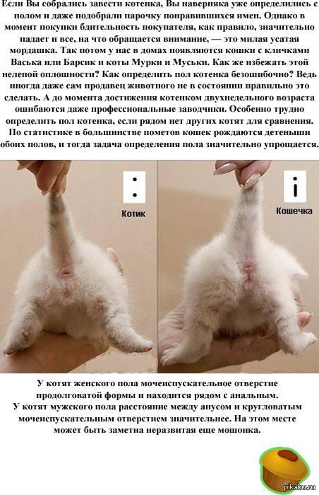 Как определить возраст котенка: основные признаки и способы