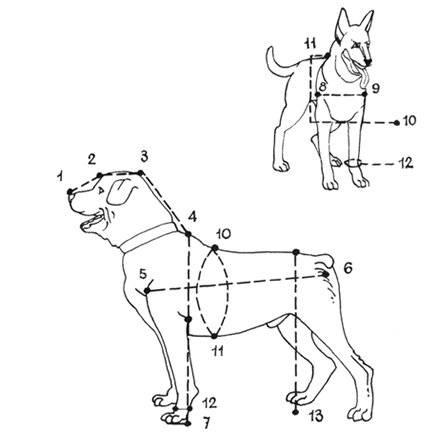 Где находится холка у собак, ее строение и назначение
