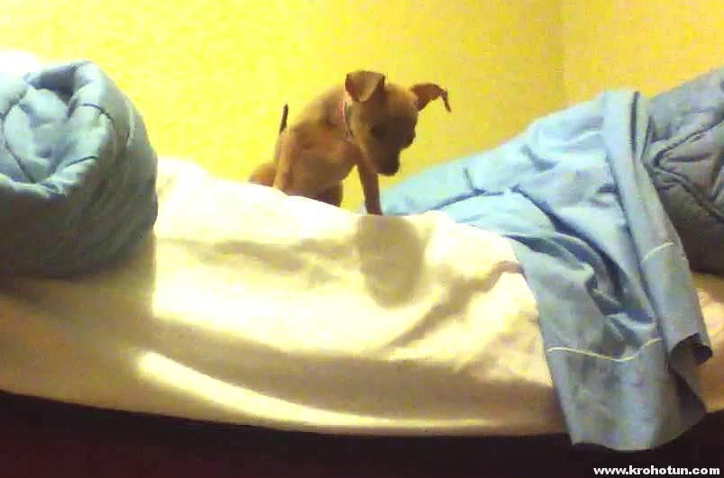 Что делать если собака гадит на кровать. собака писает на диван. почему собака писает на кровать - новая медицина