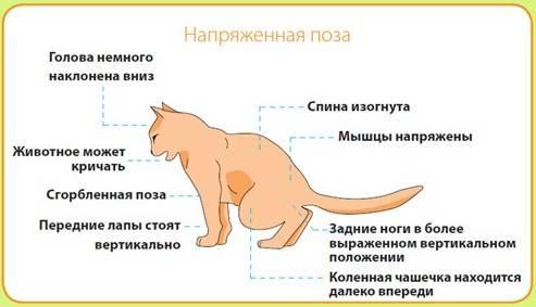 Понос у кошки: лечение в домашних условиях, причины
