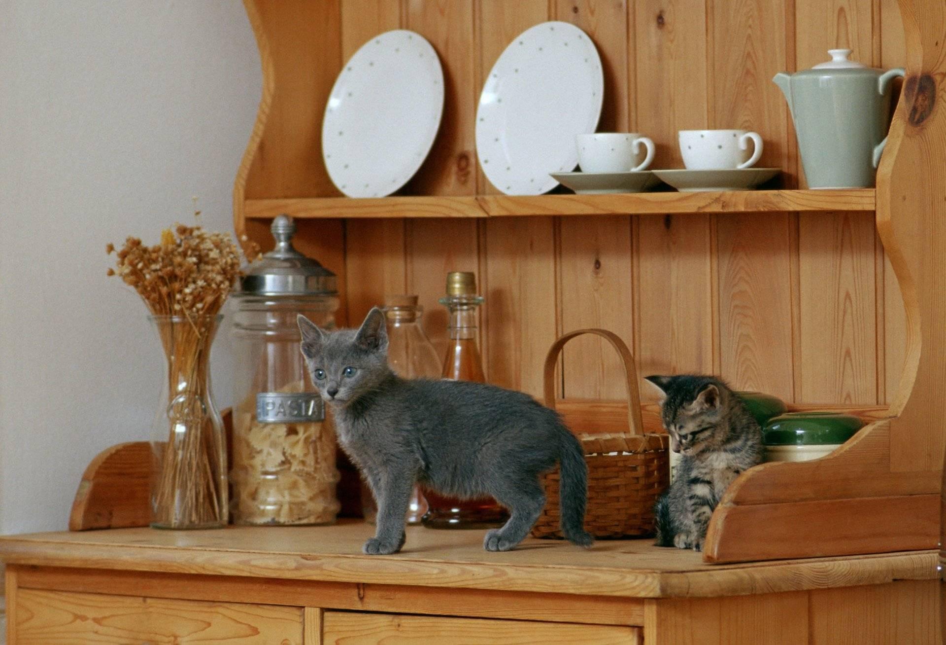 Как отучить кошку лазить по столам спать, лежать, воровать еду, сидеть в домашних условиях, совет специалиста