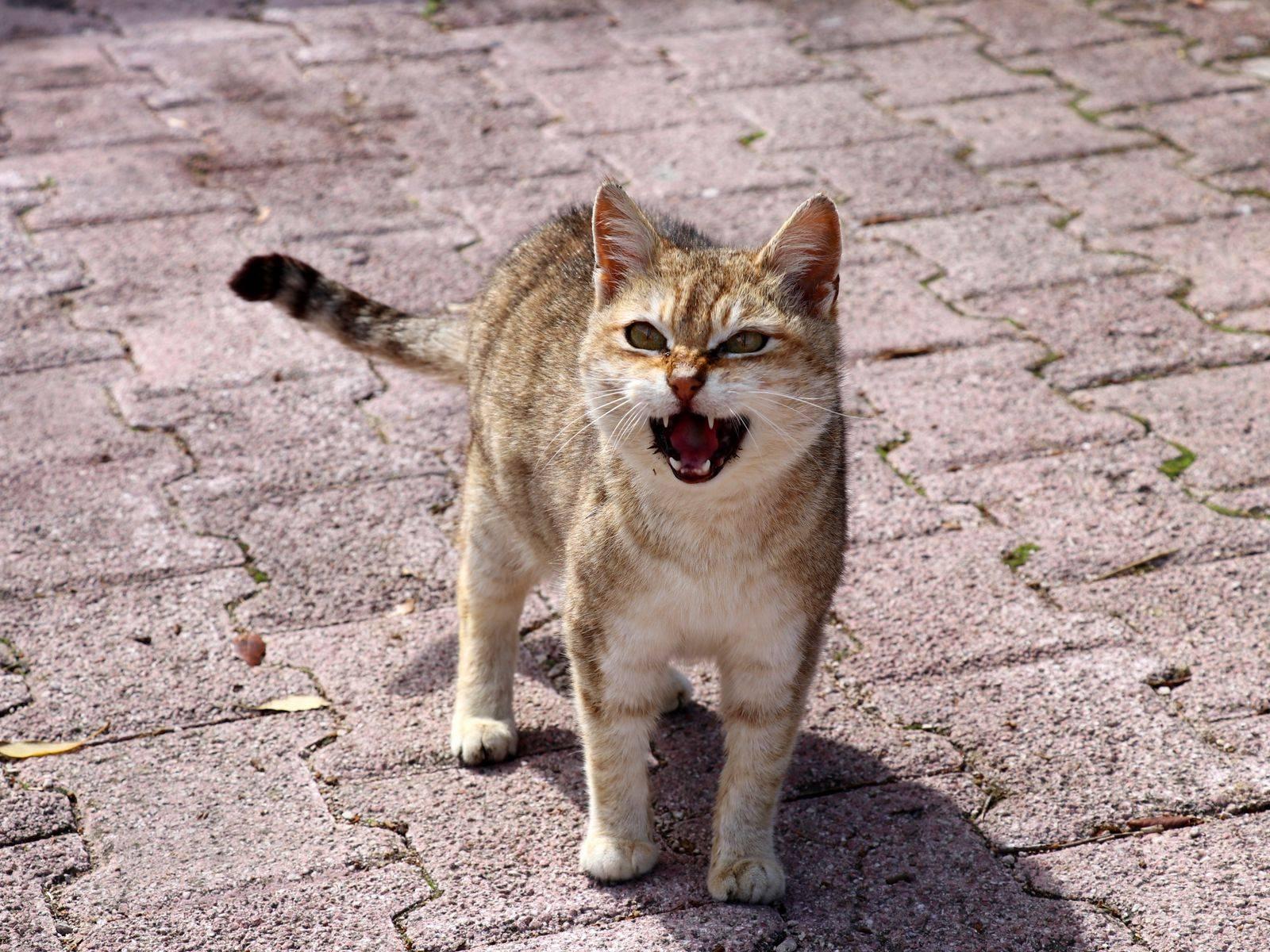 Кот или котенок по ночам не дает спать – что делать, как приучить его отдыхать, а не играть и беситься?