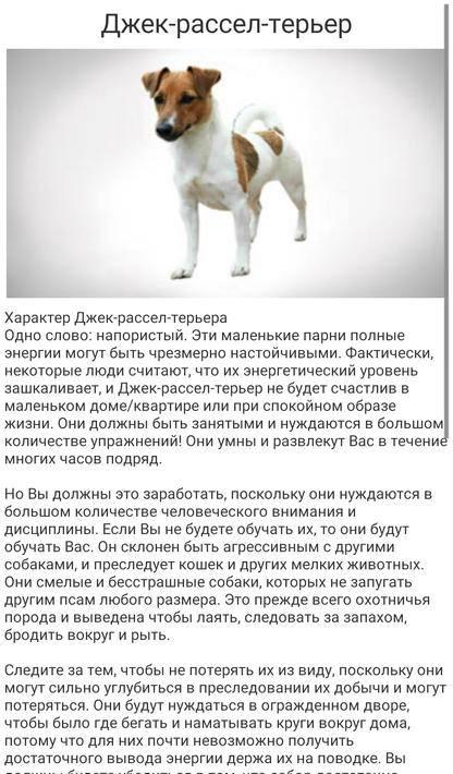 Бигль: уход и содержание в квартире и на улице + как ухаживать за щенком и что нужно учитывать перед приобретением собаки