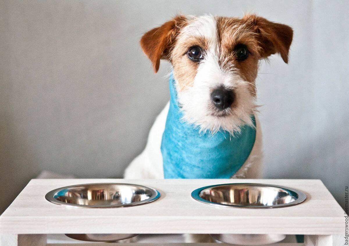Почему взрослые собаки и щенки могут не пить воду, но при этом есть