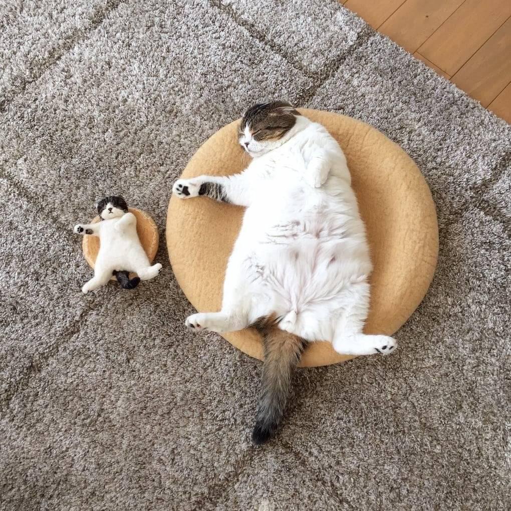 Лайфхаки для кошек и котов: как облегчить себе жизнь и улучшить условия домашним любимцам