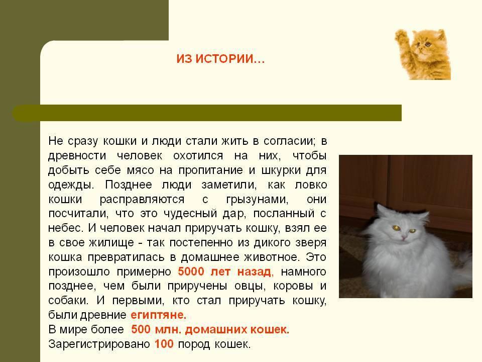 Как приучить котенка к имени: 5 этапов обучения питомца