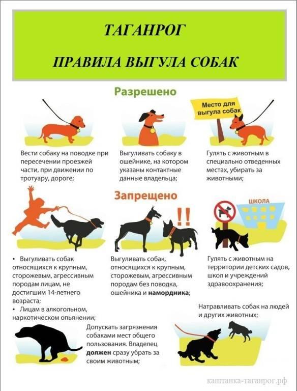 Правила содержания домашних животных в многоквартирных домах: законы, регулирующие совместное проживание с собаками, кошками и другими питомцами